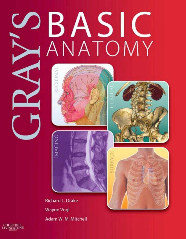 Grays Basic Anatomy Richard L Drake Medical Books Free 4u