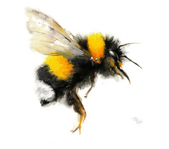Set of 4-Honey Bee Bumble Bee Watercolor Giclee Prints-Wildlife Illustration