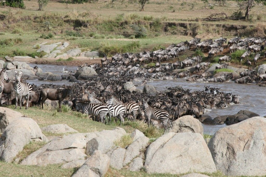 The great migration is such an awe-inspiring sight! | www.exploreafrica.net