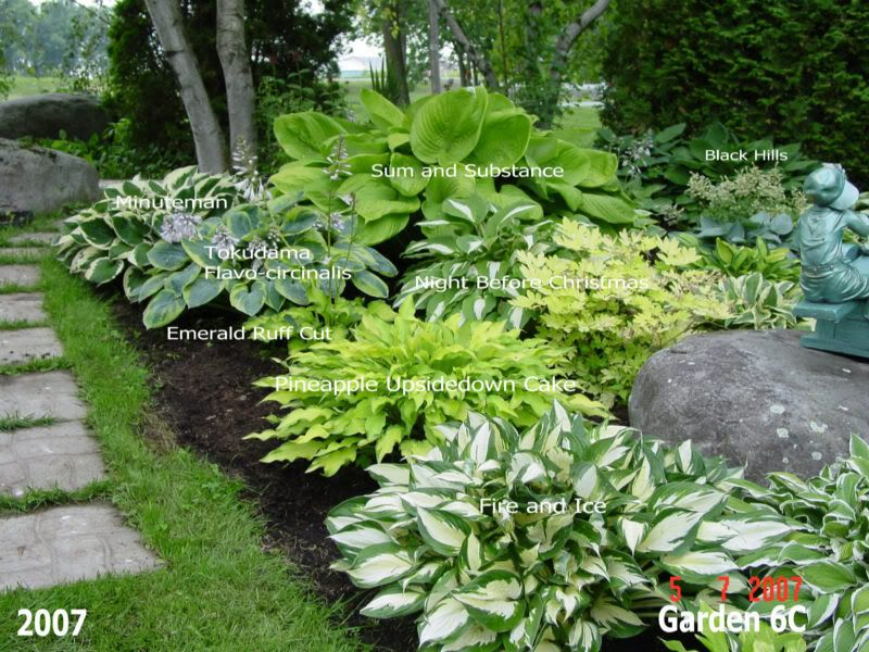 Beautiful hosta garden lots of photos with names of the for Landscaping plants