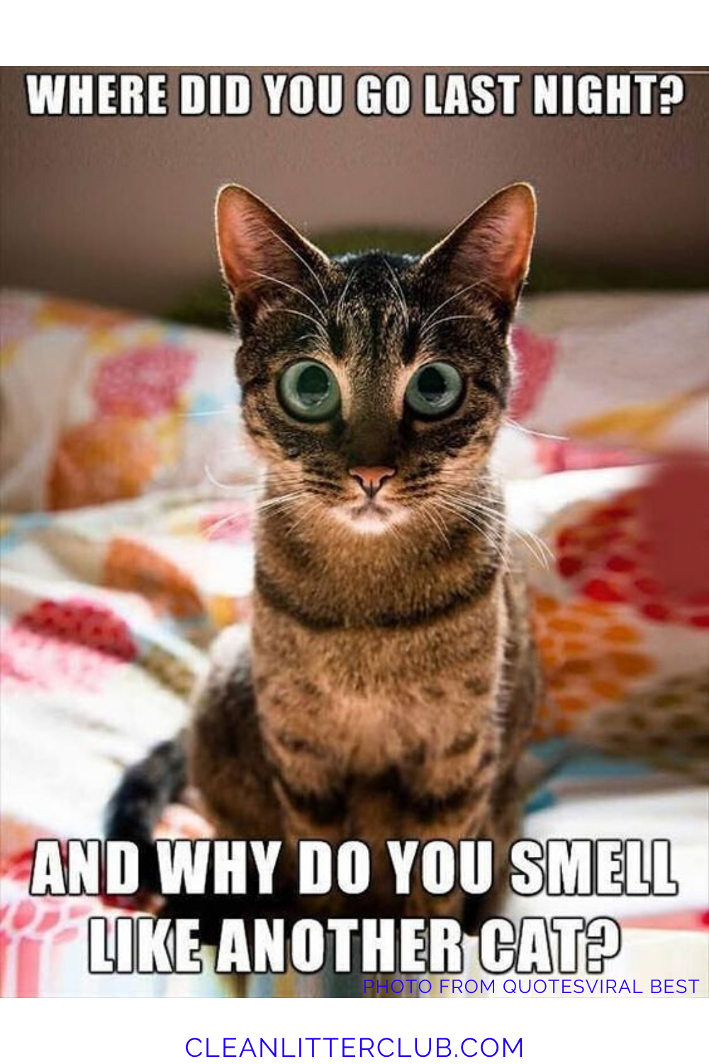 The Top Ten Funny Cat Memes of the Past Decade. in 2020