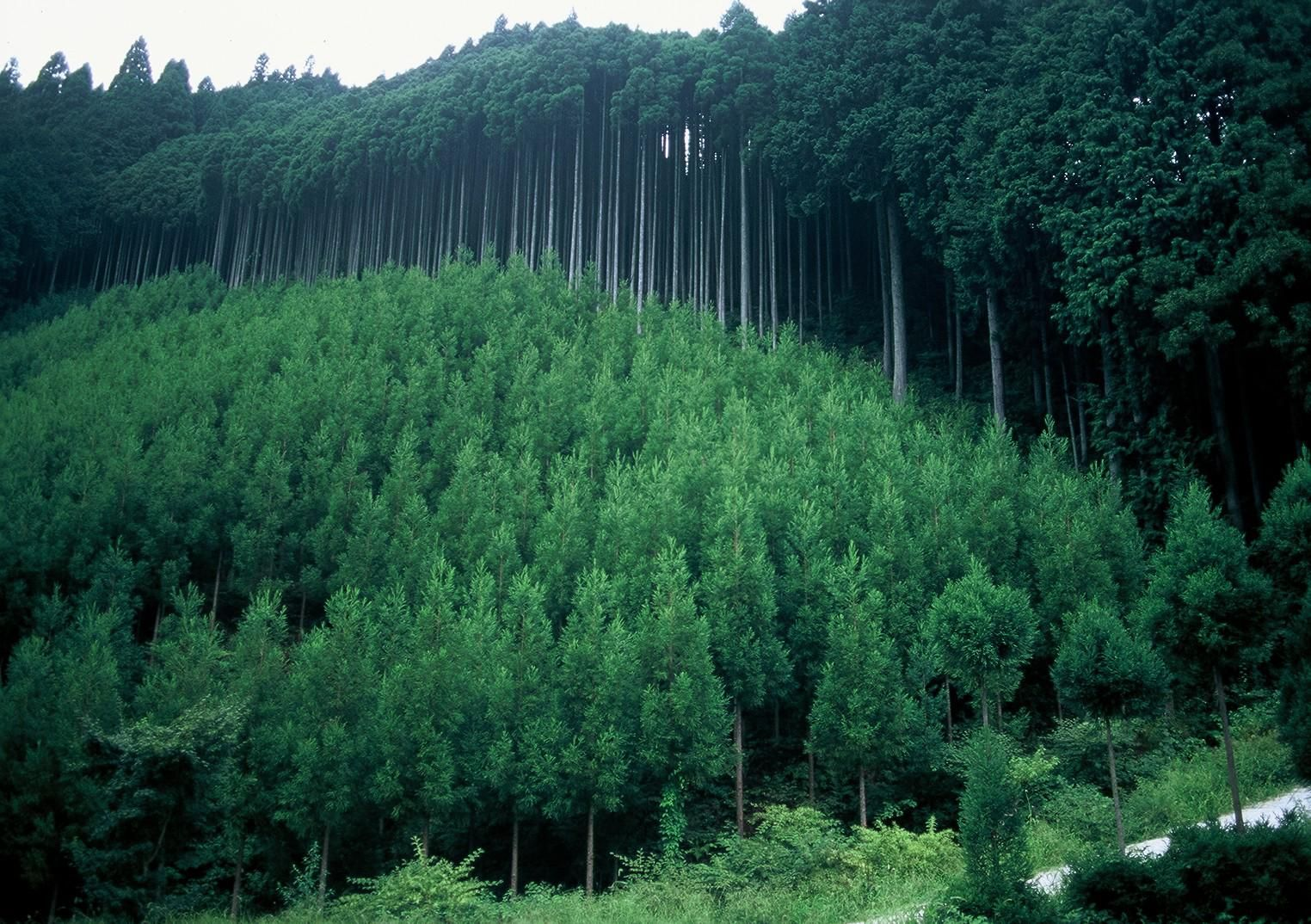Approximately 68.2% of the japanese land is under the forest cover, the world's 4th highest percentage after laos, finland, and bhutan, and far ahead of countries such as the us, britain, france, and china.japan's forest has the potential for increasing export and. Across The Years I Will Walk With You In Deep Green Forests And Shores Of Sand And When Our Time On Earth Is Through Forest Photos Forest Resources Forest