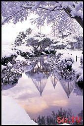 Schnee bedeckte Bäume, die in einem Teich sich reflektieren? Rosafarbene Farben eines Sonnenu…