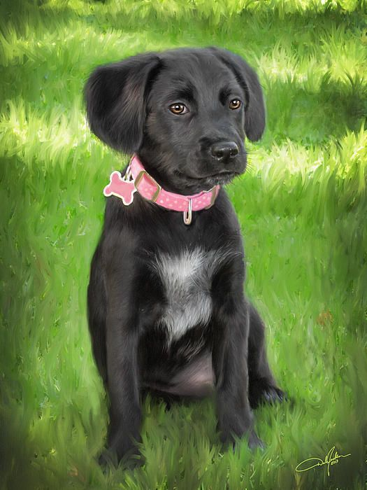 Sheprador Puppy I Want This Dog Labrador Art Labrador Artwork Doggy