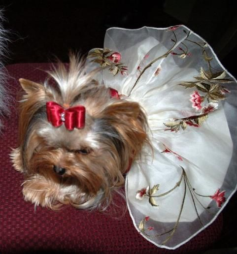 Yorkie must be the flowergirl......... | Lovable Pets ...