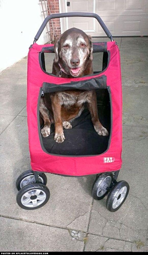 27+ Large dog stroller used info