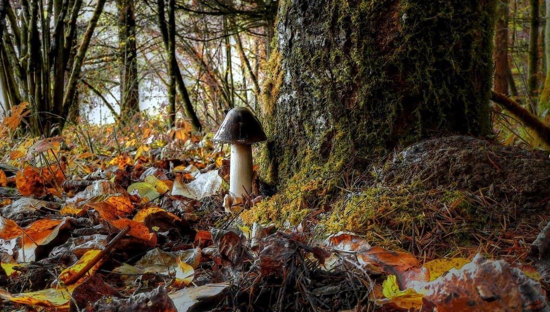 Грибы в лесу. Фото | Грибы, В лес, Лес