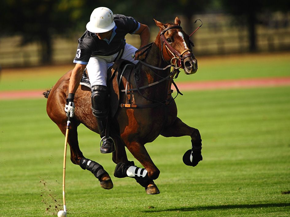 A polo player and his horse in action Sport of kings