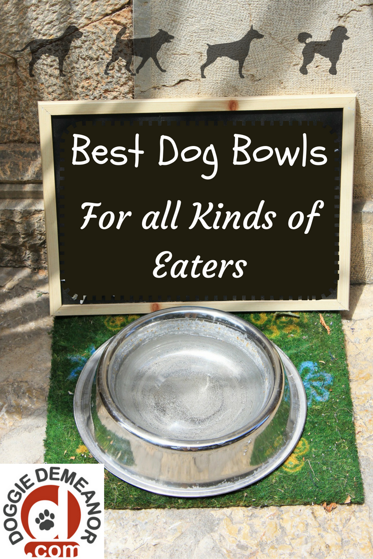Best Dog Food Bowls Why Didn't I Think of That (With