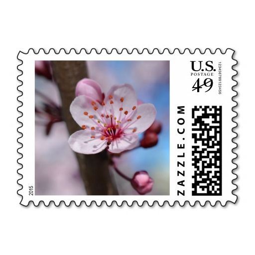 Cherry Blossom Flower Postage Stamp