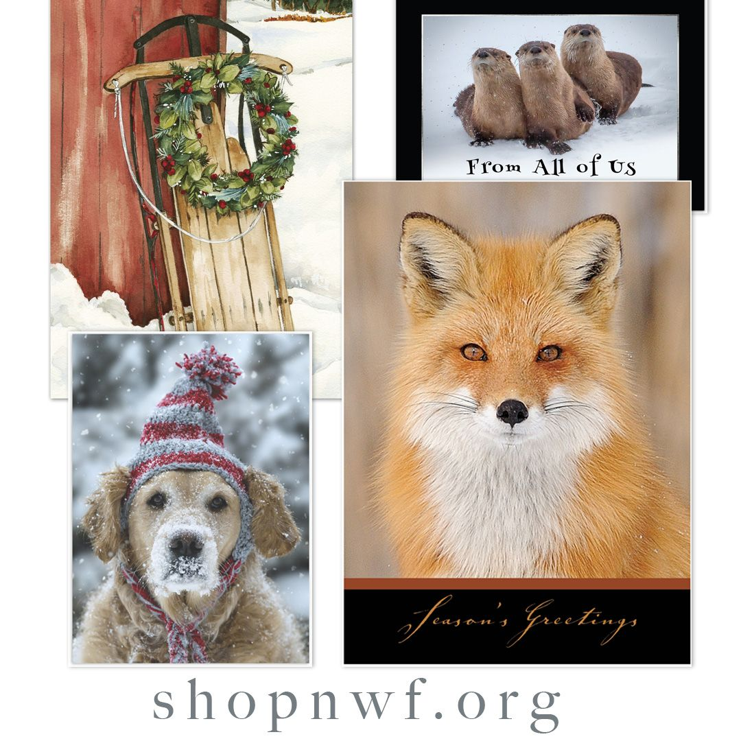 National Wildlife Christmas Cards 2021 14 Wildlife Holiday Cards Ideas Wildlife Holiday Cards Cards