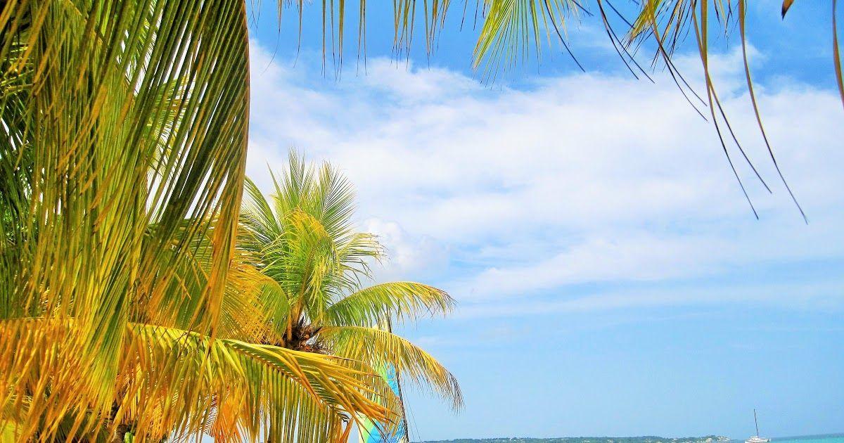 14 Gambar Pemandangan Pantai Resolusi Tinggi Gambar Pemandangan Laut Pohon Alam Lautan Liburan Download Gambar Pemand Di 2020 Pemandangan Pantai Matahari Terbenam