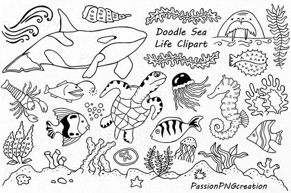 Doodle Marine Life Clipart Sea Life Clip Art Ocean Life Etsy In 2021 Marine Life Under The Sea Drawings Whiteboard Art