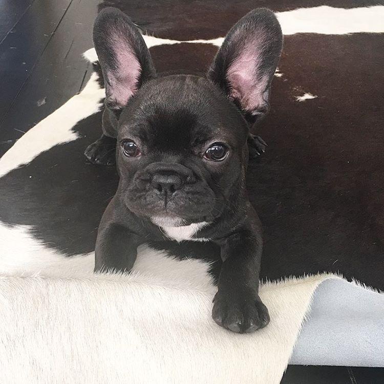 She Has Big Ears But She Still Won T Listen Mabel 11