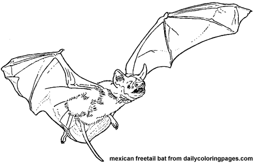 Texas Mexican Freetail Bat Animal Coloring Pages Png 500 322 Pixels Bat Coloring Pages Bat Animal Coloring Pages