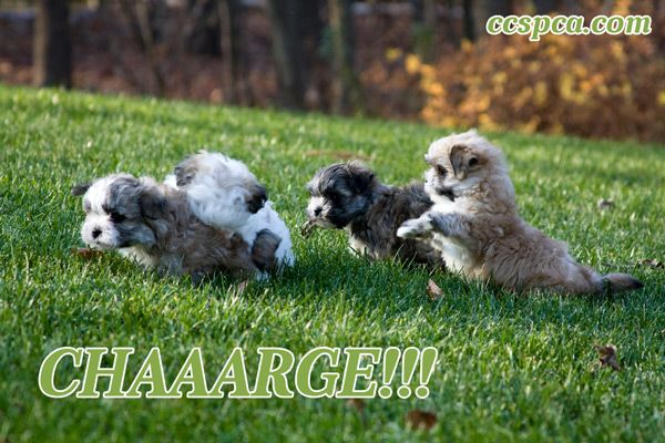 Cute Puppy Caption Chaaarge Dog Boarding Facility Rescue