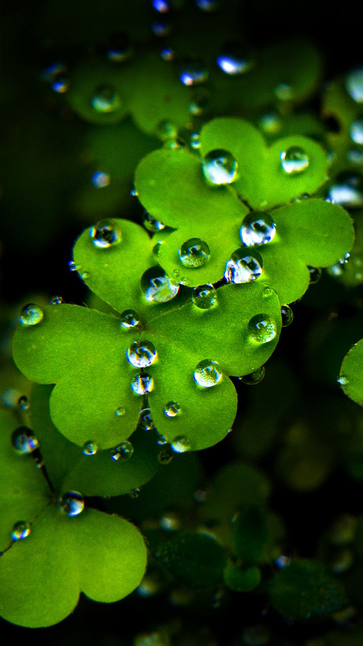 Best Android Wallpapers Hd 720x1280 On Desktop Backgrounds With Android Wallpape St Patricks Day Wallpaper Beautiful Flowers Wallpapers Best Wallpapers Android
