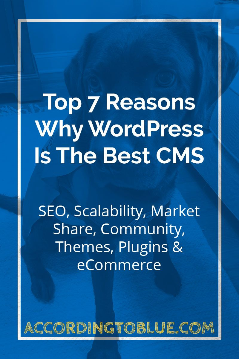 Top 7 Reasons Why Wordpress Is The Best CMS Wordpress