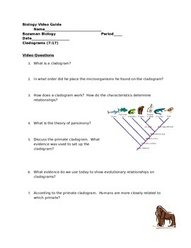 how to make a cladogram worksheet answer key