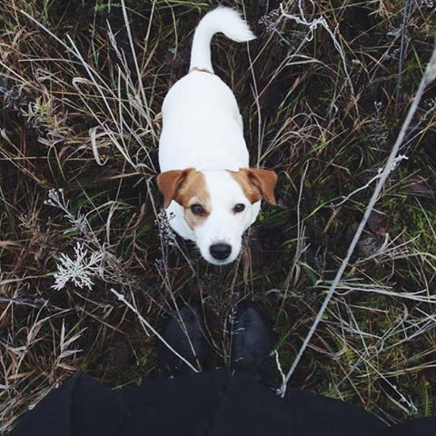 """""""I'm a 20y old photographer from Sweden. I try to capture the best things in life, one of them is dogs - Of course!"""" writes @enya.sydney.  #dogsofinstagram #dogs #dog"""