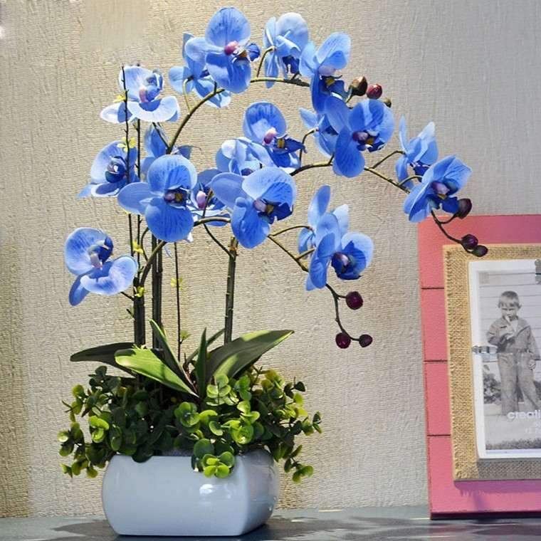 Easy Methods To Make An Orchid Bloom