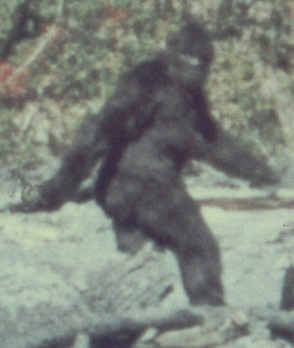 Bigfoot Man Monster Or Myth