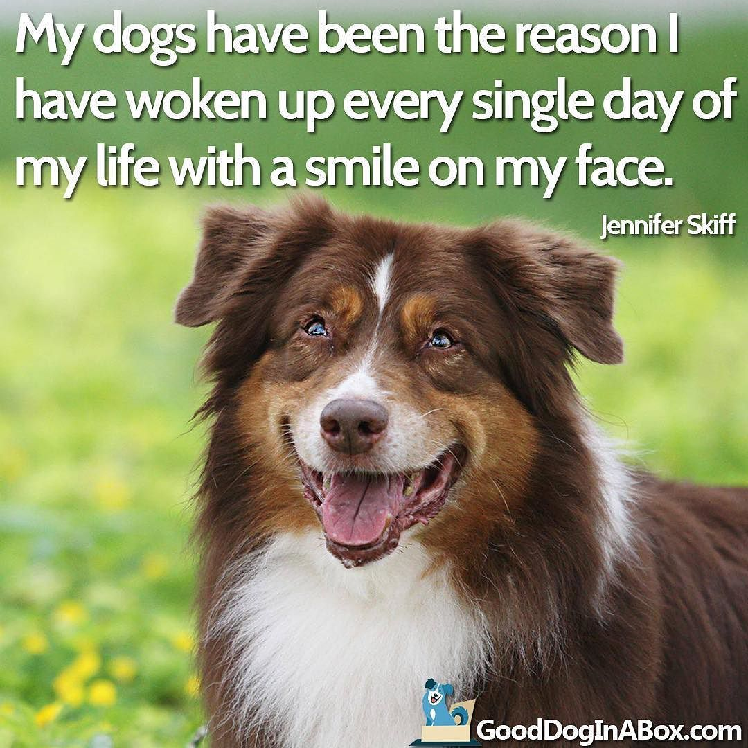 Love Animal Quotes Who Couldn't Love That Face Dogquotes Jenniferskiff