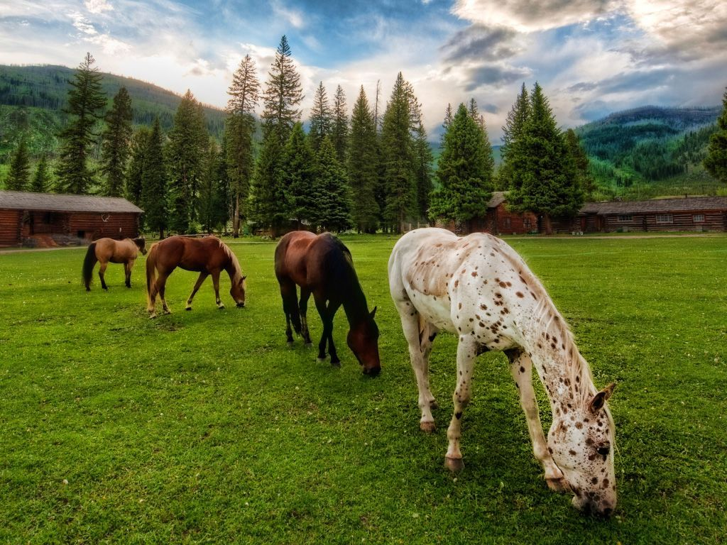 Most Inspiring Wallpaper Horse Country - b9c6e058140eb4e0b7313885523ff573  Perfect Image Reference_96564.jpg