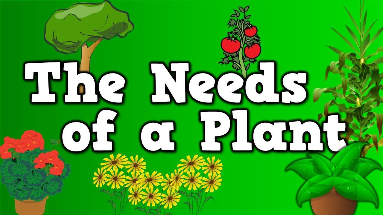 The Needs Of A Plant Song For Kids About 5 Things Plants Need To Live Kindergarten Science Plants Kindergarten Plant Science [ 720 x 1280 Pixel ]
