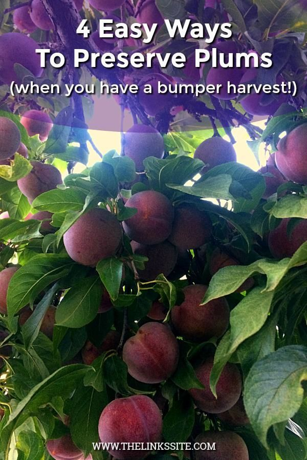 4 Easy Ways of Preserving Plums So You Can Enjoy Them All Year  The Links Site These are 4 simple methods of preserving plums that I use to get the most from my plum harv...