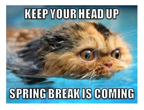 Pin By Melissa On I M A Teacher Teacher Humor Teacher Memes Teaching Humor