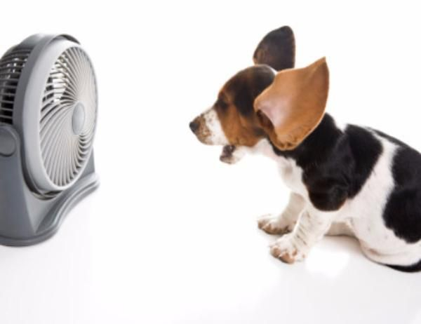 Deluxe Dog Cooling Fan Automatic Turns On With Images Pets