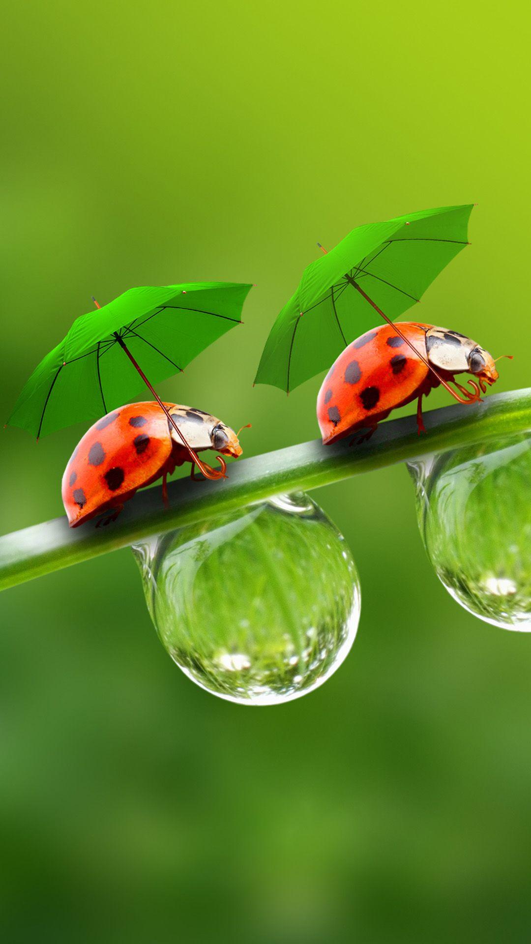 Nature Beetle In Umbrella On Dew Leaf iPhone 6 plus