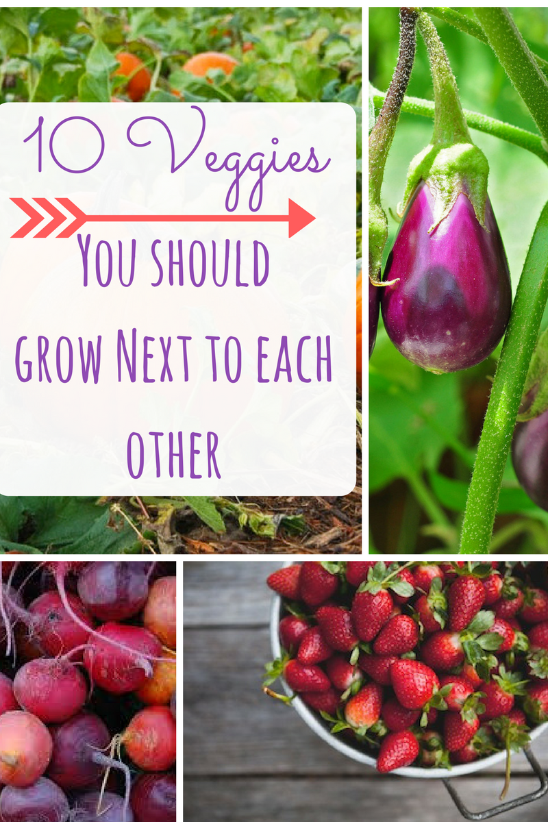 8 Vegetables You Should Grow Together For The Best Garden With