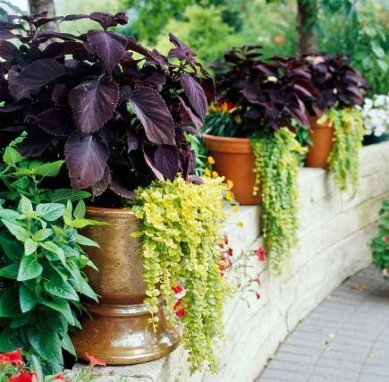 Unify your landscaping by repeating color and shape with similar or identical containers.