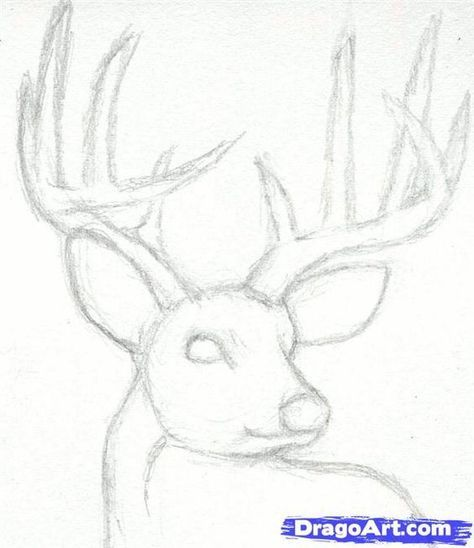 How to draw a deer head buck dear head step by step