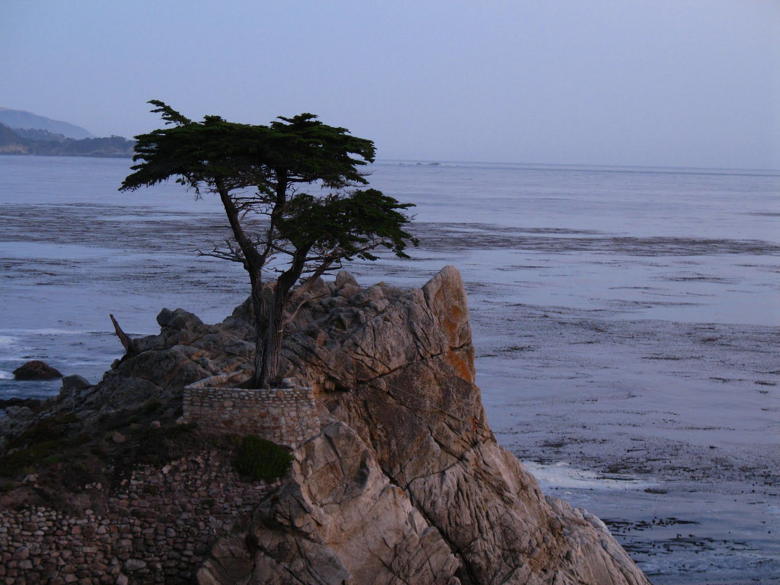 Trees That Grow In Sand Can Cypress Trees Grow In