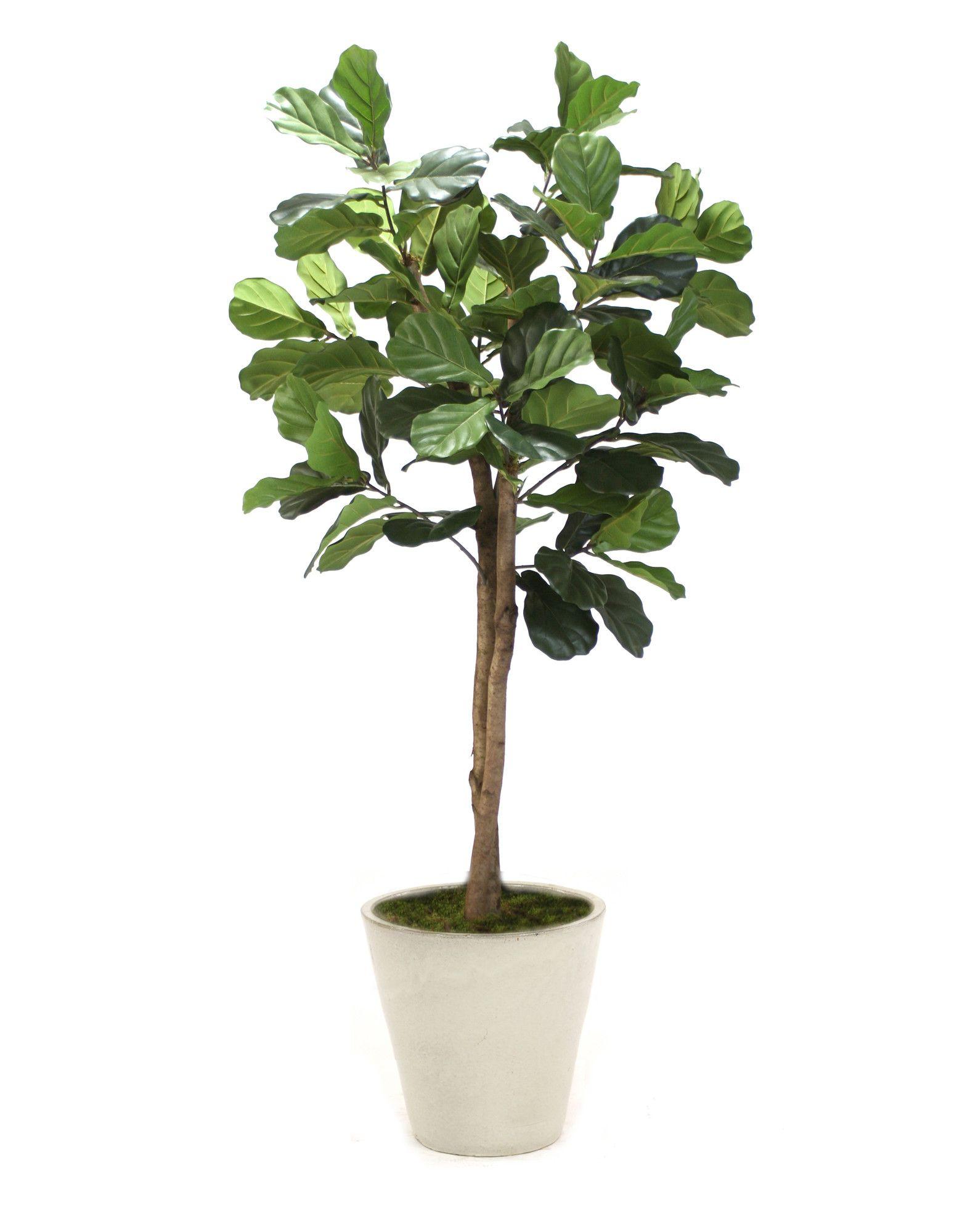 Distinctive Designs Fiddle Leaf Tree In Planter Amp Reviews