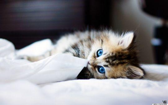 Baby Katze Wallpaper Bezaubernde kätzchen, Baby katzen