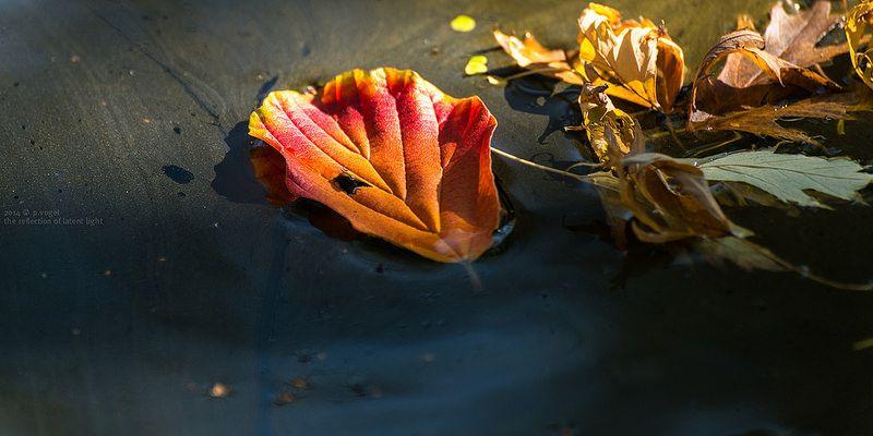 Herbstlaub im Sonnenbad