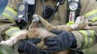 firefighters rescue cats - YouTube
