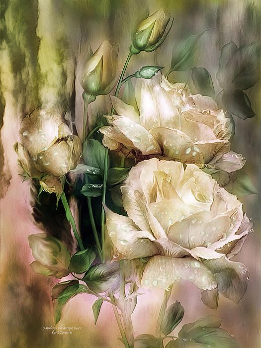 Raindrops On Antique White Roses Mixed Media by Carol Cavalaris - Raindrops On Antique White Roses Fine Art Prints and Posters, 2013