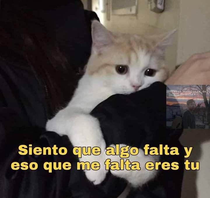 Pin De Lanicoleotaku En Michis Memes Divertidos Meme Gato Memes Romanticos