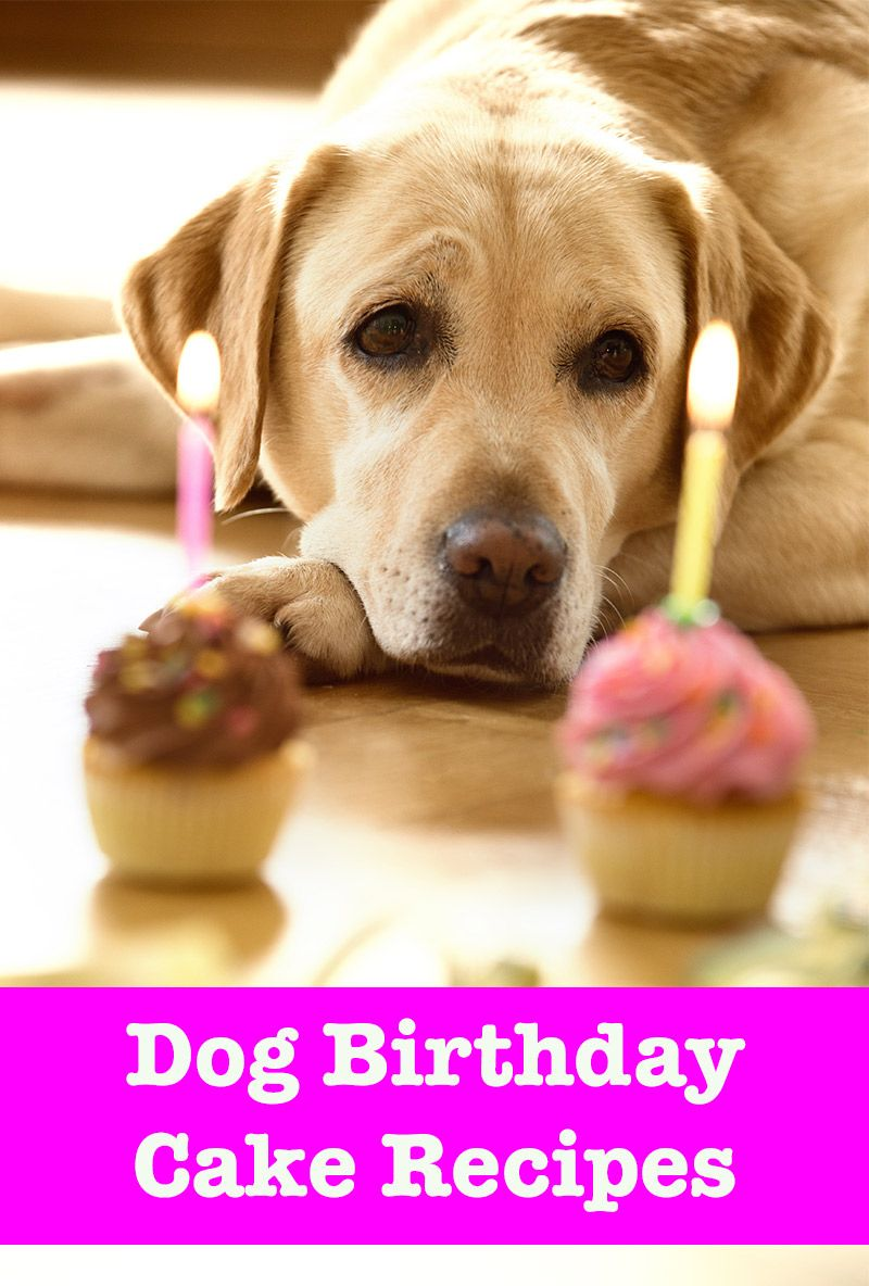 Dog Birthday Cake Recipes From Easy To Fancy Bakes (With