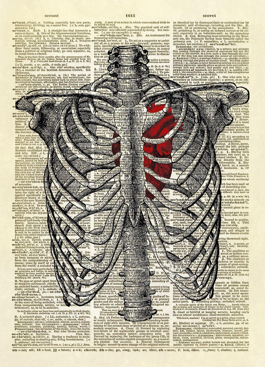 Human Rib Cage with Heart Dictionary Art Print | Human ribs, Rib ...