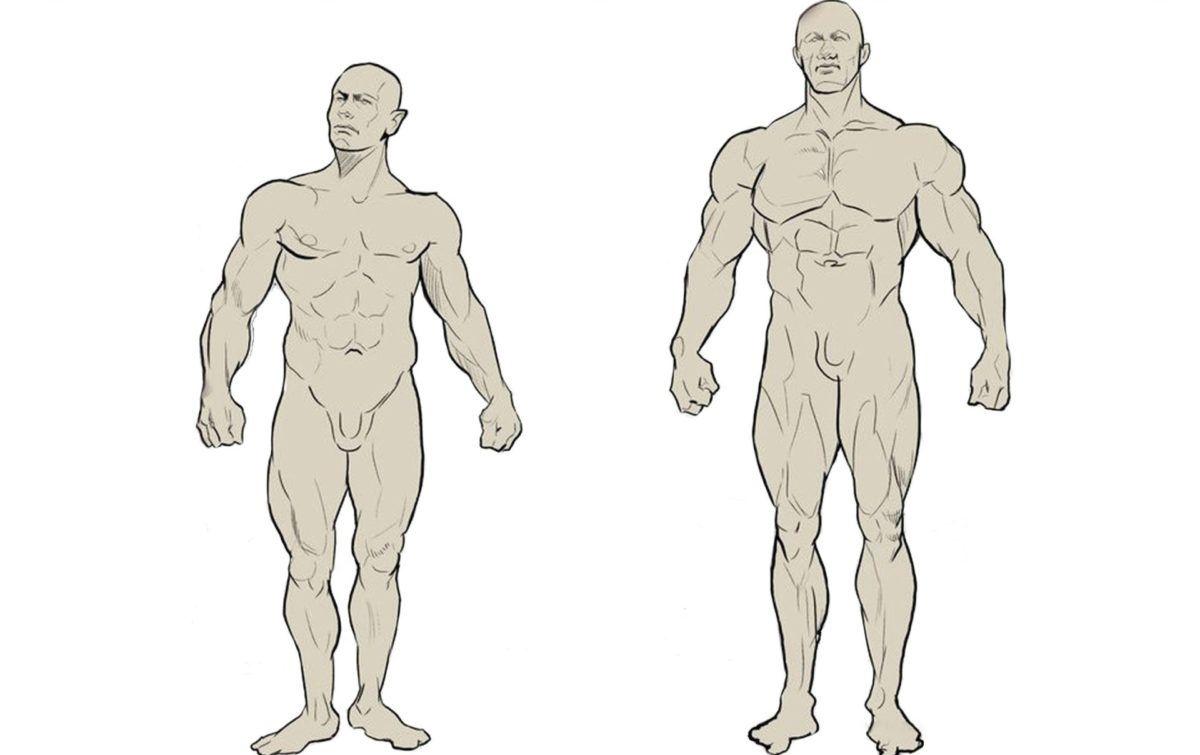 это виды телосложения у мужчин названия картинки название