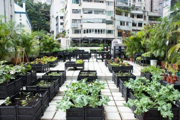 Op het dak van de Bank van Amerika in Hong Kong, dat negenendertig verdiepingen telt, staat een tuintje van paksoi, sla en mosterd blad. Langs beide zijden, zie je een duizelingwekkende skyl