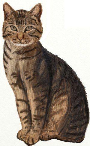 Katze einfach zeichnen – Zeichnen lernen für Anfänger. Wenn Sie eine Katze mal…