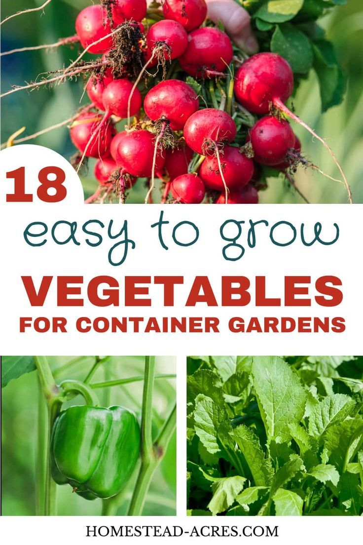 Vegetable Container Gardening For Beginners is part of Container gardening vegetables, Growing vegetables in containers, Container gardening, Growing vegetables, Gardening for beginners, Easy vegetables to grow - Vegetable container gardening makes growing vegetables easy even if you are a beginner  Try these easy to grow plants to have a great garden