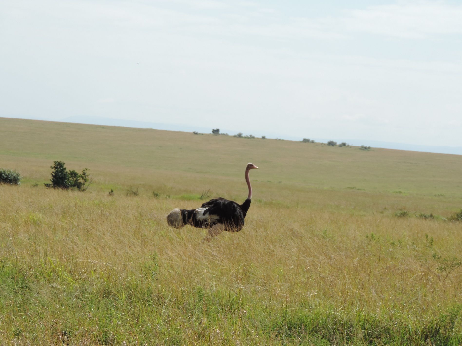 It's a classic safari destination and one of the best
